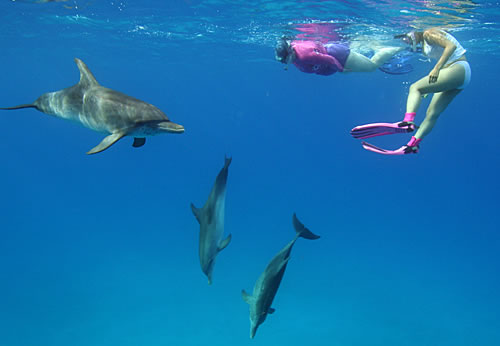 swim with the dolphins in Bimini Bahamas